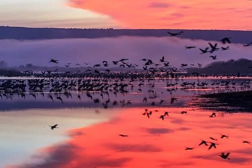 red lake bird birds sunrise landscape israel reflaction fogg hahula