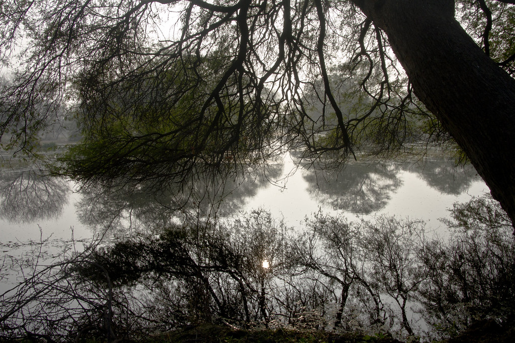 14_01_20143635056341_reflections_bharatpur