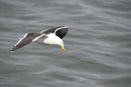 218 Vogel in Ushuaia