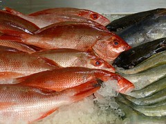 animal, fish, fish, seafood, red snapper, food, red seabream,
