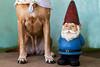 gnome_9842