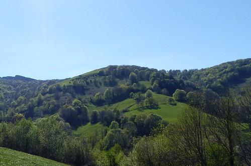 Dans le Quint/Quinto Real, Pyrénées-Atlantiques.