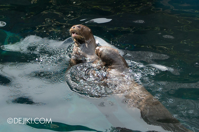 River Safari - Giant River Otters 2