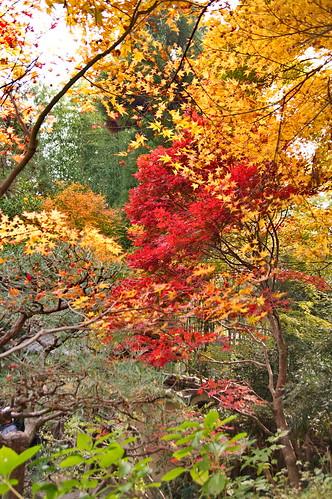 【写真】2012 紅葉 : 厭離庵/2020-10-15/IMGP7842