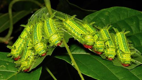 Fluorescent Defoliators