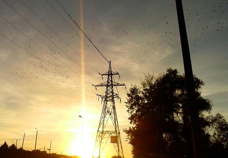 Birds, birds, birds... by aigarsbruvelis