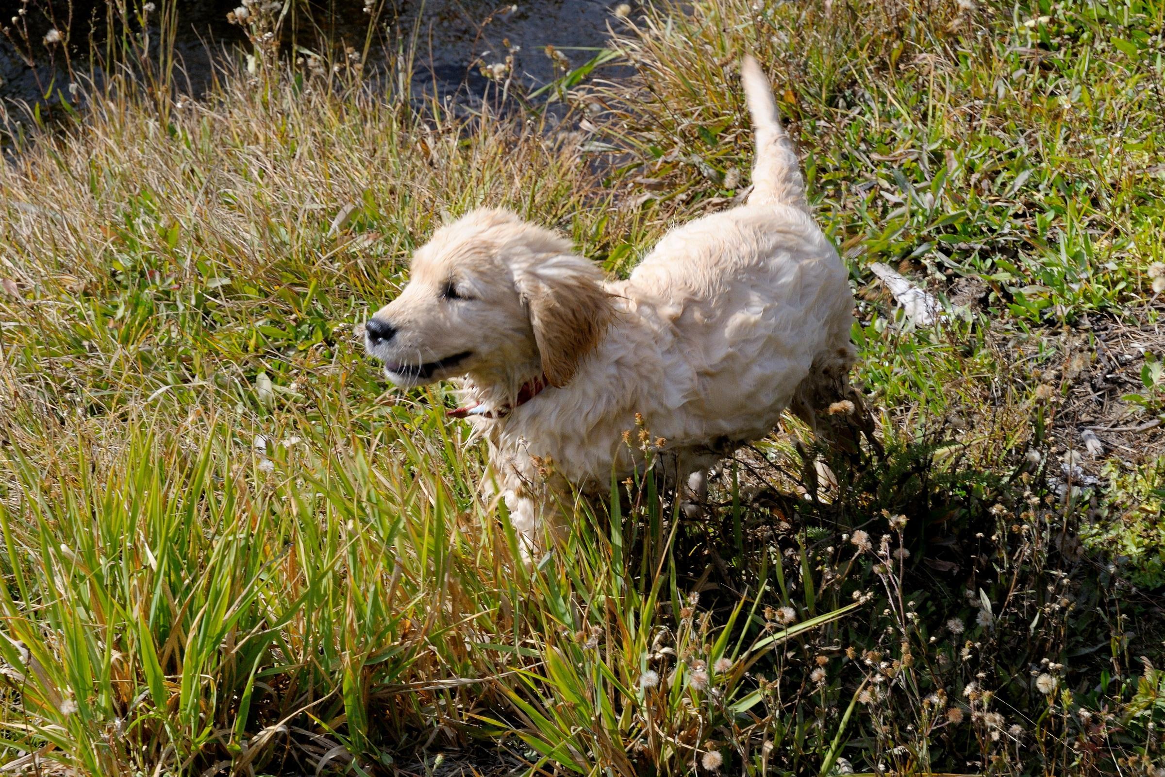 Maggie Valley Dog Friendly Cabins