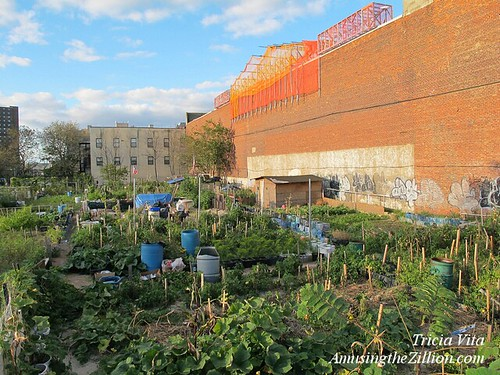 Boardwalk Community Garden