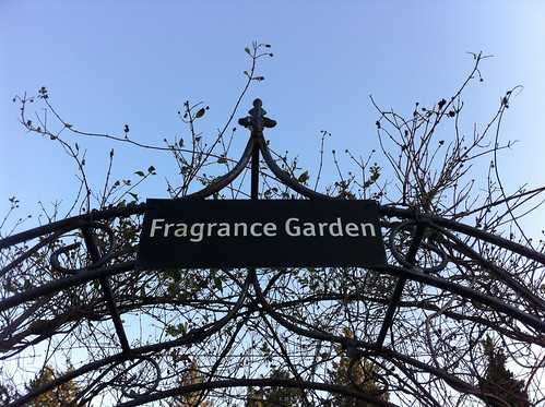 Fragrance Garden by Ayala Moriel