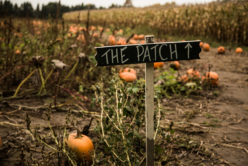 The Patch [Explore] by Karyn Stepien Photography