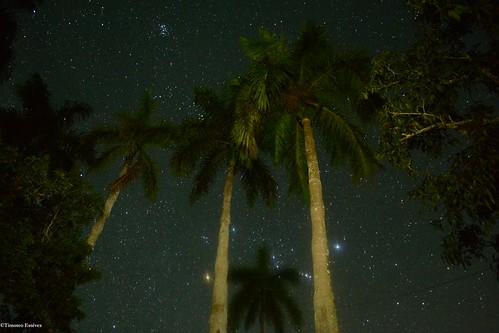 Orion en medio de las palmas