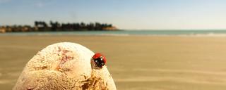 The Sun-loving Ladybird.