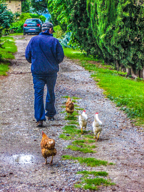 Mike & the Chickens