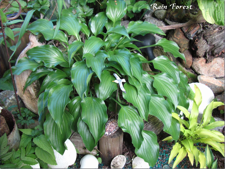 Rain Forest 6-3-13 (206)