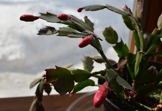 49/365 Flower Theme