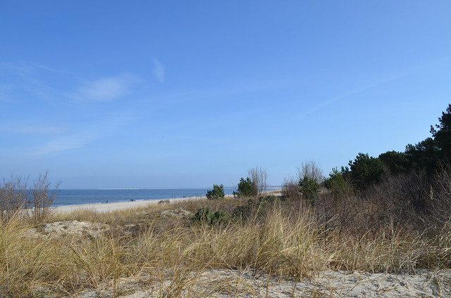 Ahlbeck beach Germany_dunes grass and trees