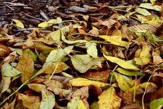 Autumn in MN