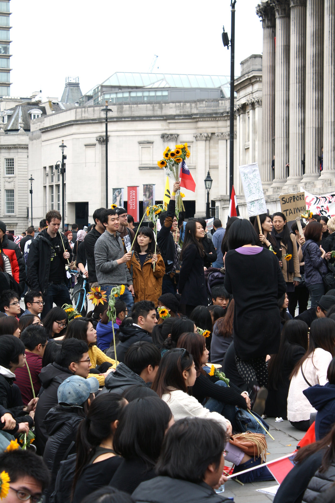 sunflower protest - the london project