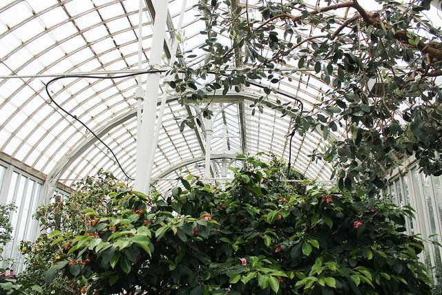 hejregina.blogspot.com palmhuset3