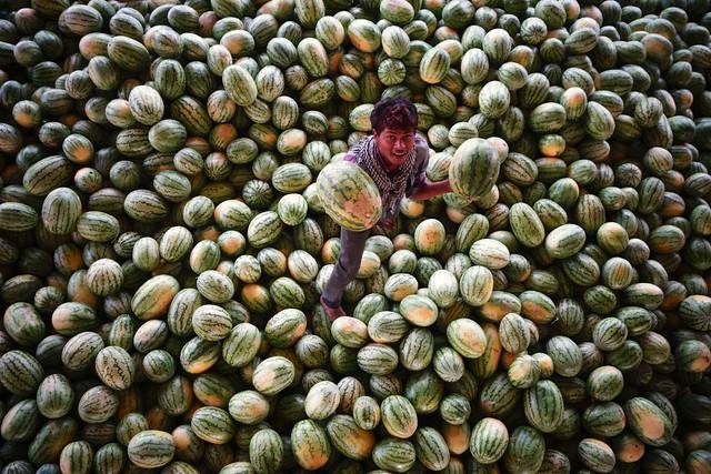 T52/15 Summer is Here - Kothapeta Fruit Market - 078