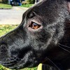 Eye against eye.  #porkchopexpress #puppy