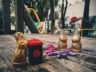 #bunny #bunny🐰 #conejo #chocolate #park #parque #dulce #candy #rabbit🐰 #rabbit🐇