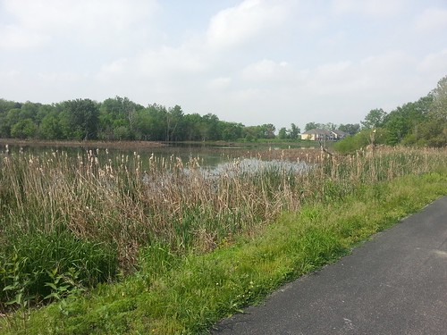 Celery Bog next to the bike trail