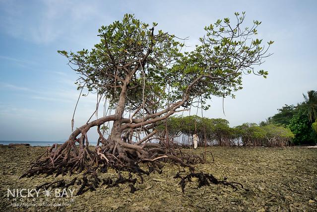 Mangrove Trees - DSC_6868