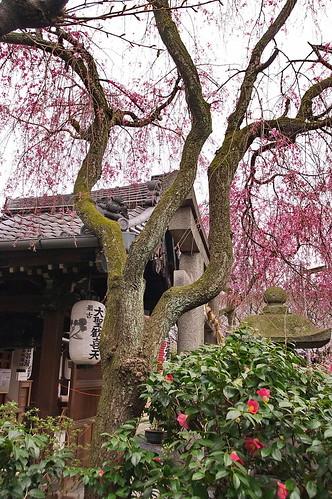 【写真】2013 桜 : 雨宝院/2021-09-19/IMGP9121