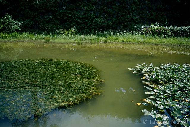 金沢城公園のカメ / Turtle at Kanazawa Castle Park