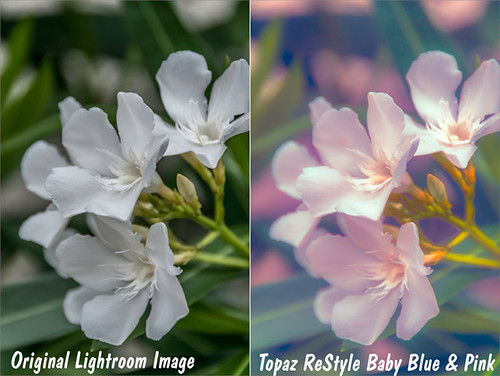 Original and Topaz ReStyle results of white flower image