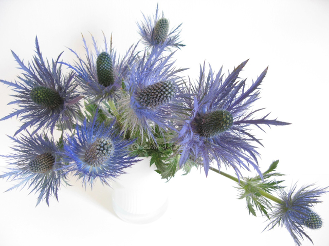 Day 16, The August Break, 2013 - { floral } // sea holly | Emma Lamb