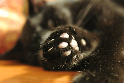 Sleeping cat paw