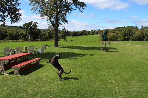 dog playing dogs connecticut ct farmland views farms fetch