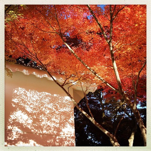memories of momiji by sunnywinds*