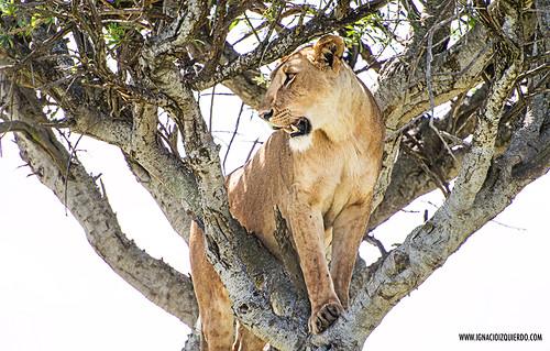 Kenia - Masai Mara 51