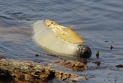Falklands - Wildlife