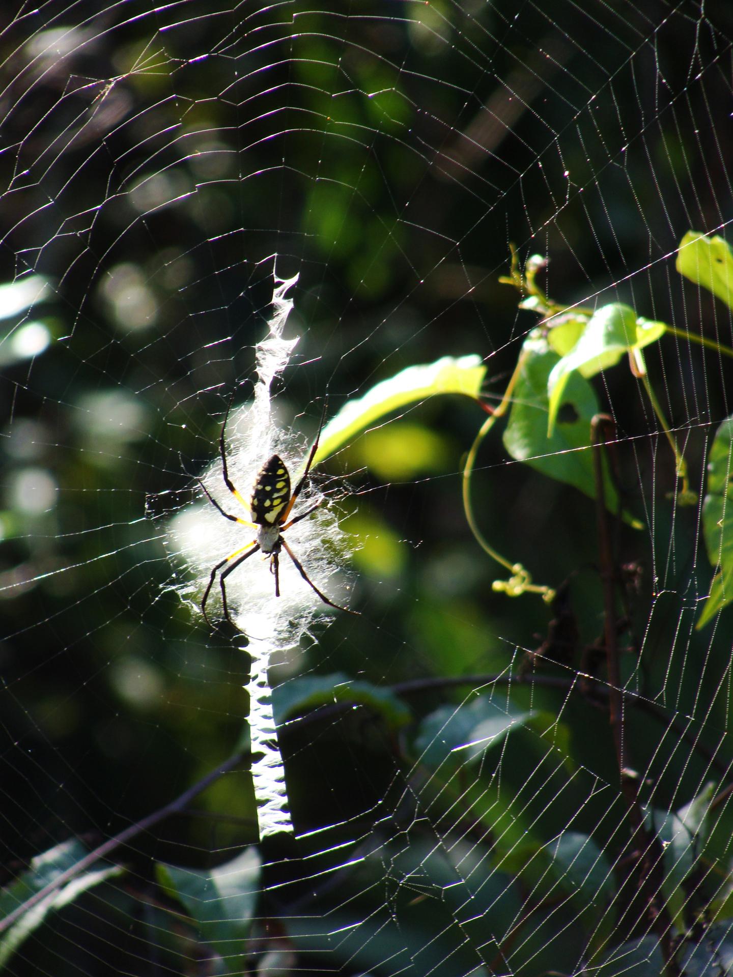 10-23-Spider2