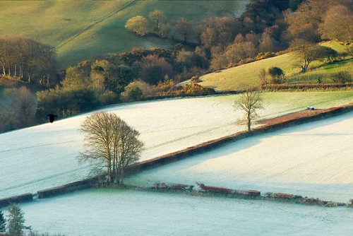 travel england tree nature field rural sunrise landscape europe unitedkingdom somerset devon exmoor countisbury