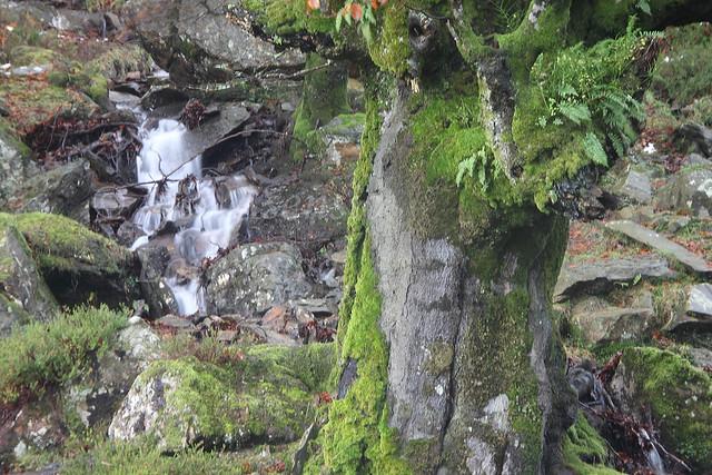 Parque Natural de Gorbeia/Gorbea #DePaseoConLarri #Photography 2142
