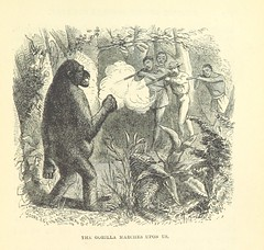 "British Library digitised image from page 301 of ""Stories of the Gorilla Country, etc"""