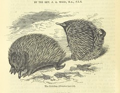 Image taken from page 450 of 'Beeton's Historical Romances, Daring Deeds, and Animal Stories. Illustrated, etc'