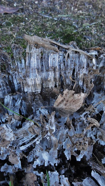 Needle ice, showing the tiers marked off by the grains of soil it incorporates as it grows.