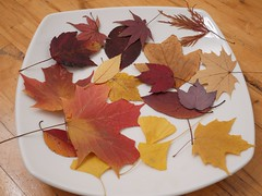 月, 2013-12-09 20:11 - 押し葉 Pressed Leaves