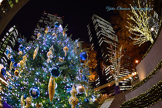 Shinjyuku Christmas tree.