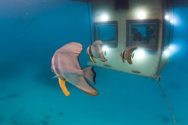 the-manta-resort-underwater-hotel-4