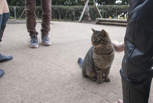 今回唯一会った猫