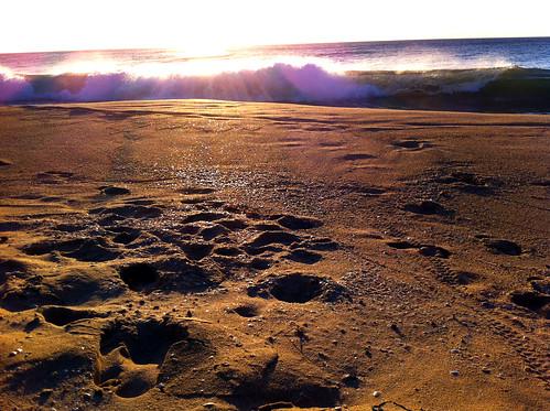 Shell-Glittered Sand
