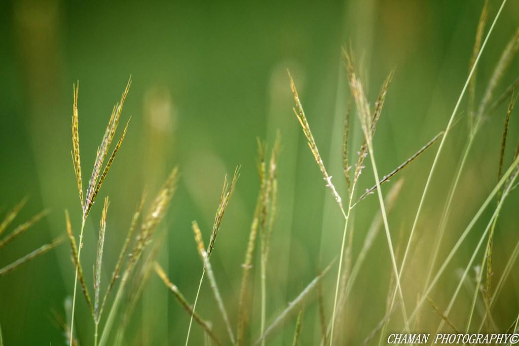 IMAGE: http://farm3.staticflickr.com/2859/12179410534_9a18d45999_b.jpg