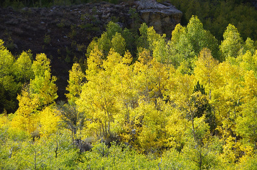 fallcolor nevada lamoillecanyon